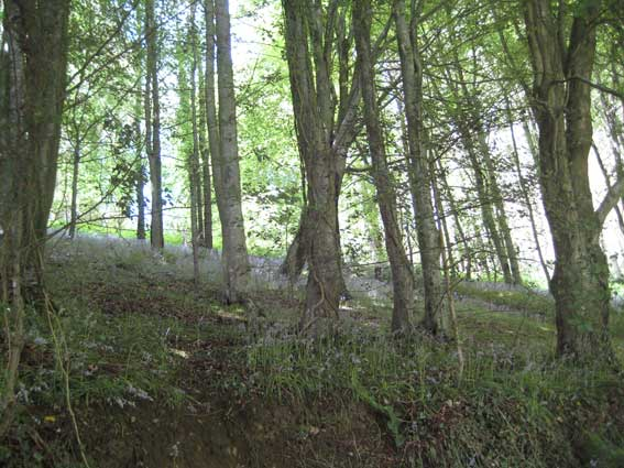 Woodland-on-Langdon-Hill