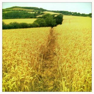 Dorset walk 1