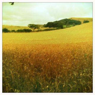 Dorset walk 2